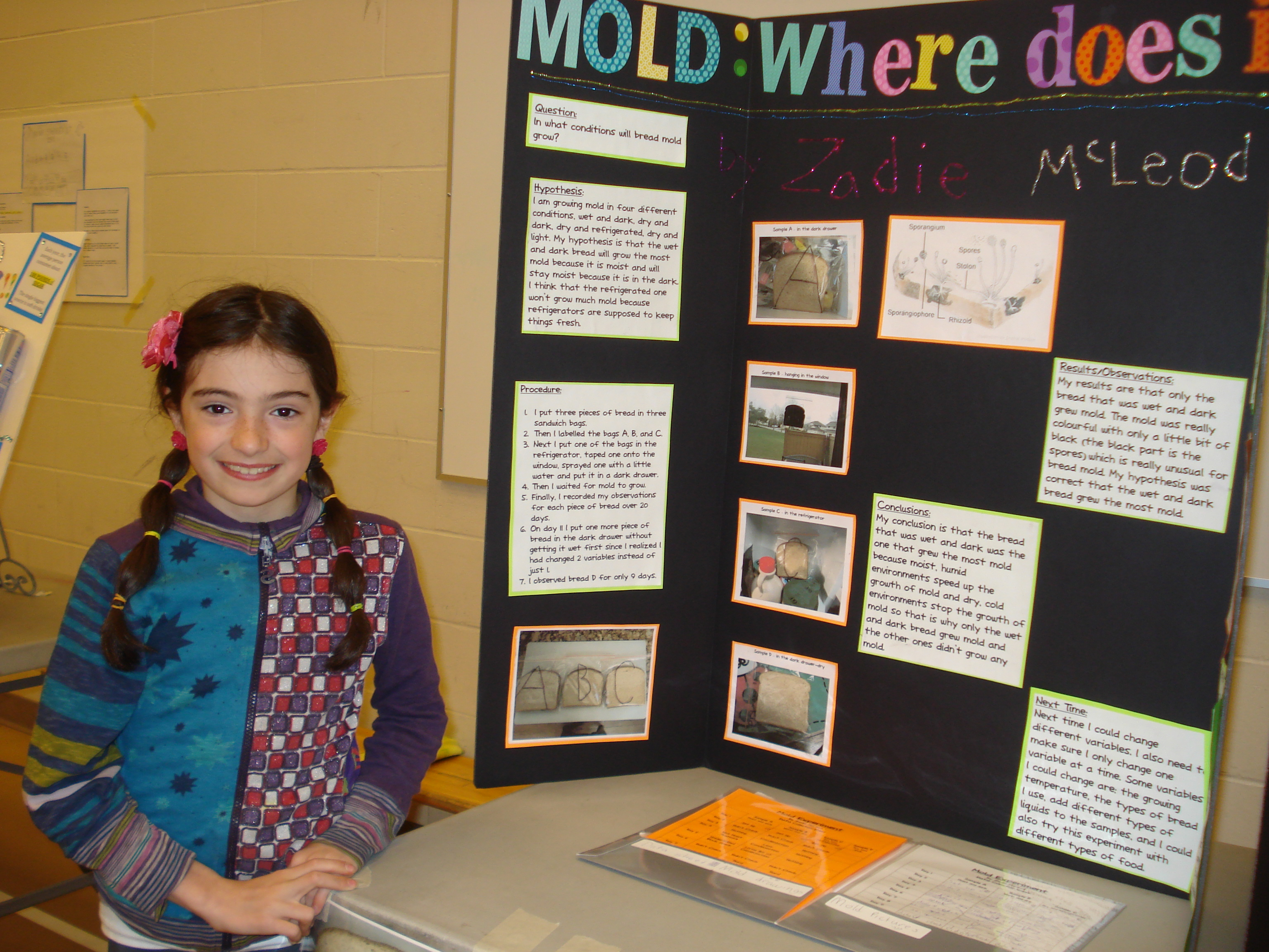 mold science fair projects Mold garden experiment mold can be excellent subject for the 5th grade science fair project there are different kinds of mold and we are dealing with them daily.